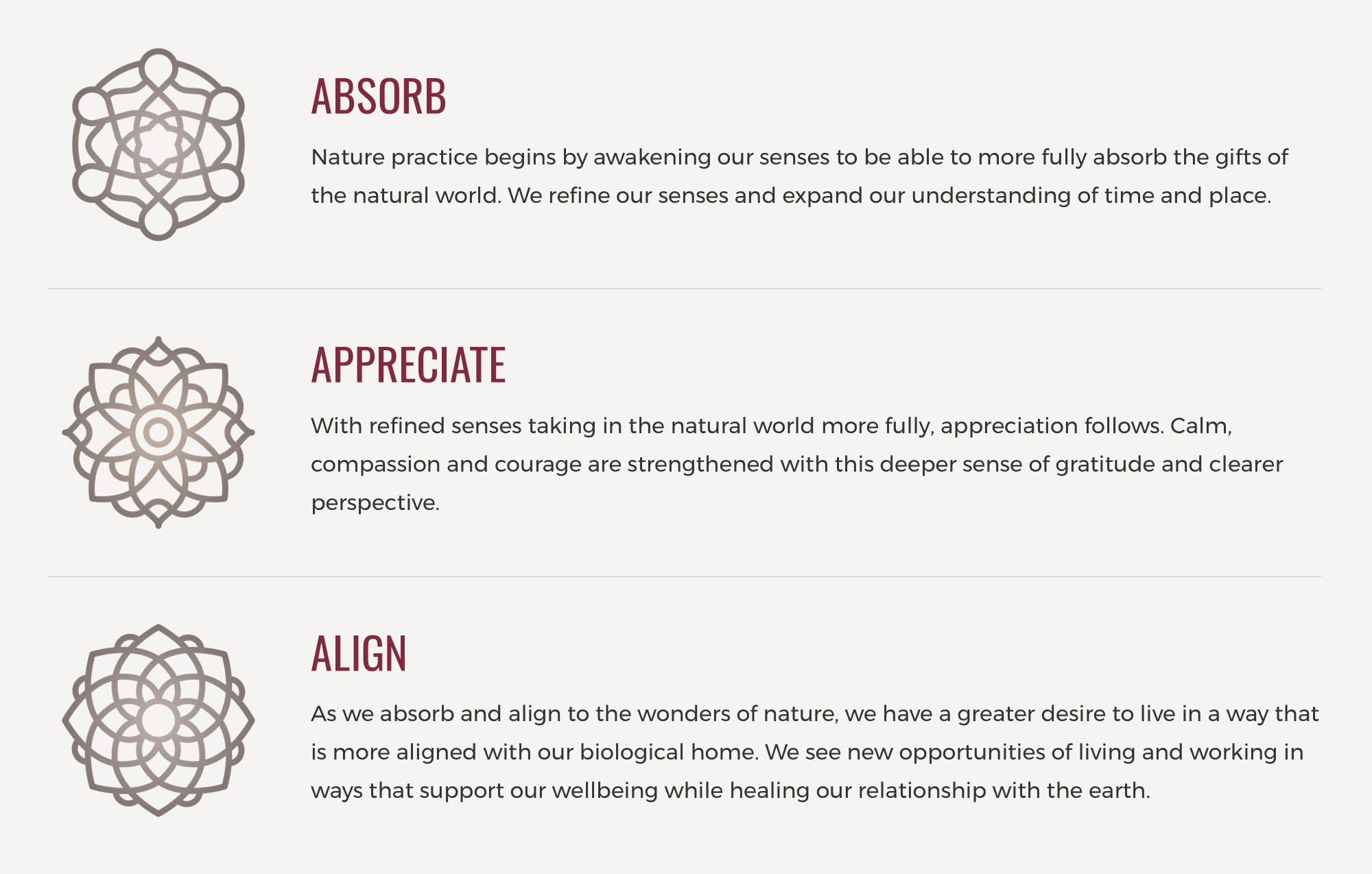 Absorb Appreciate Align Website Detail