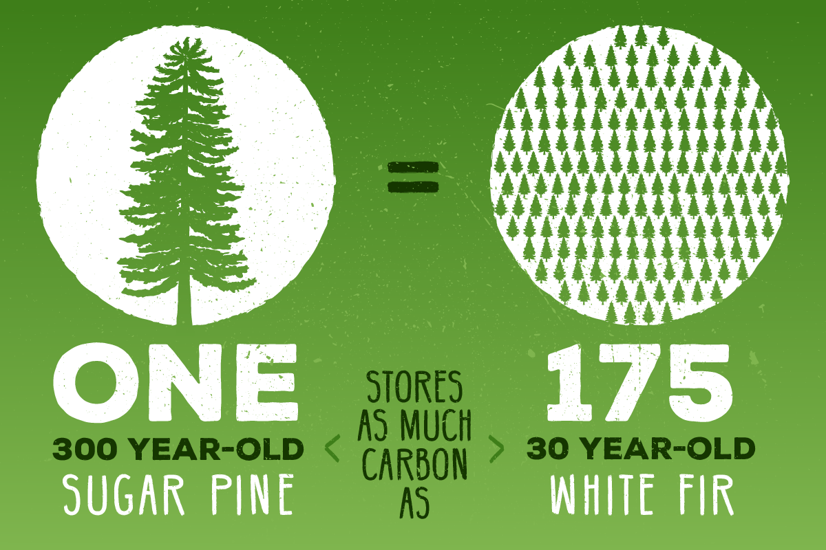 Commonwise Tree Comparison Infographic